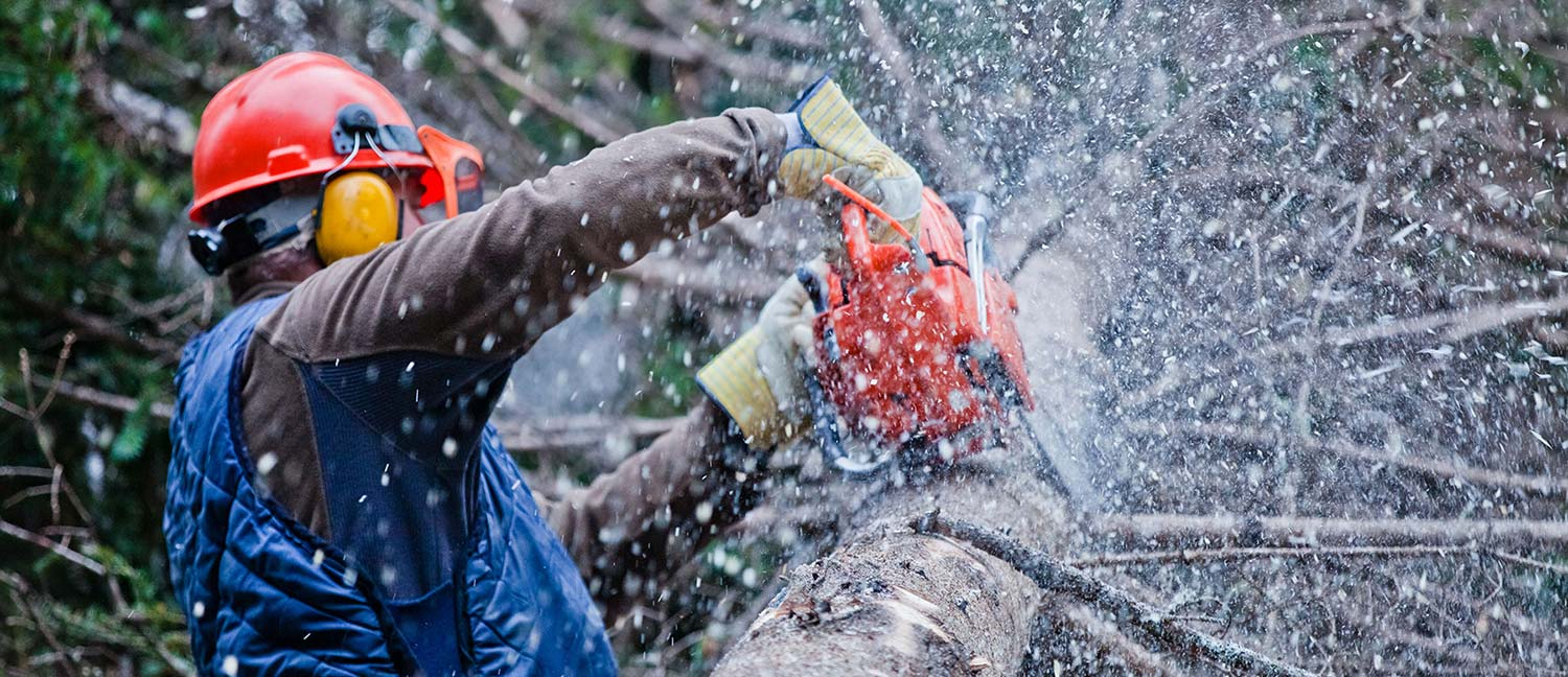 Image result for tree removal services