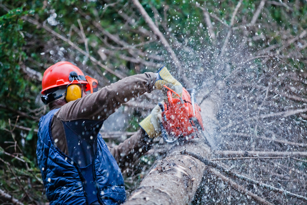 Residential Commercial Munil Tree Services