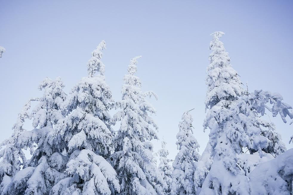 Staten Island Tree Winterization
