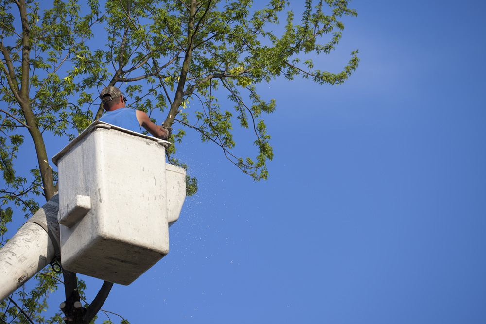 A Man in a Bucket Truck Trimming Trees